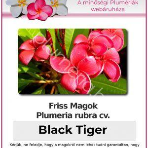 "Plumeria rubra ""Black Tiger"""