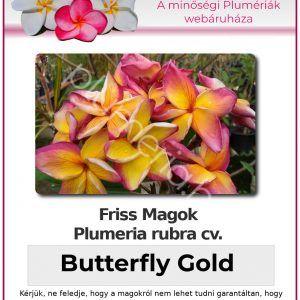 """Plumeria rubra """"Butterfly Gold"""""""