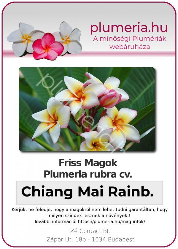 "Plumeria rubra ""Chiang Mai Rainbow"""
