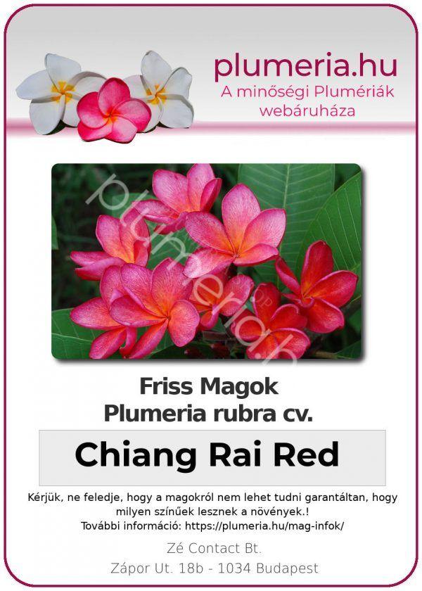 """Plumeria rubra """"Chiang Rai Red"""""""