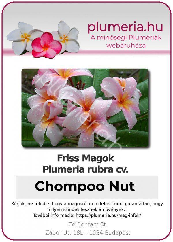 """Plumeria rubra """"Chompoo Nut"""""""