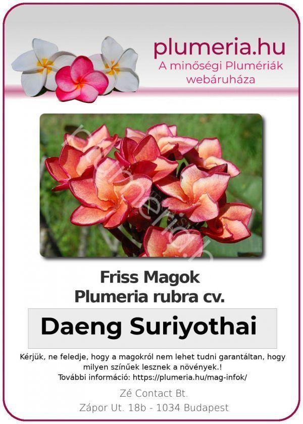 "Plumeria rubra ""Daeng Suriyothai"""