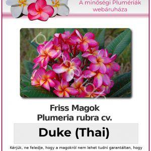 """Plumeria rubra """"Duke"""" (Thai)"""