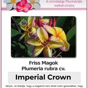"Plumeria rubra ""Imperial Crown"""