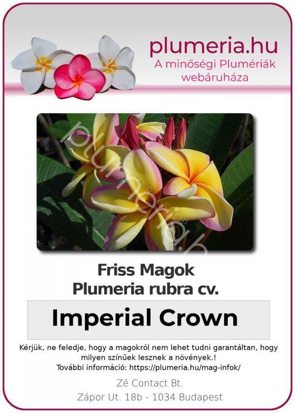 """Plumeria rubra """"Imperial Crown"""""""