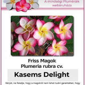 "Plumeria rubra ""Kasems Delight"""
