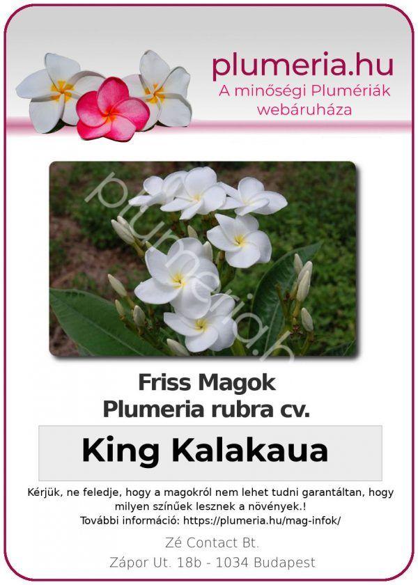 """Plumeria rubra """"King Kalakaua"""""""