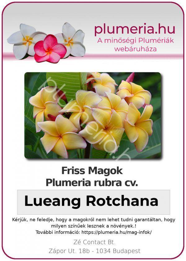 "Plumeria rubra ""Lueang Rotchana"""