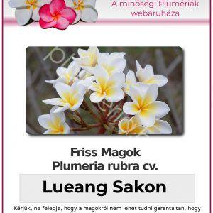 "Plumeria rubra ""Lueang Sakon"""