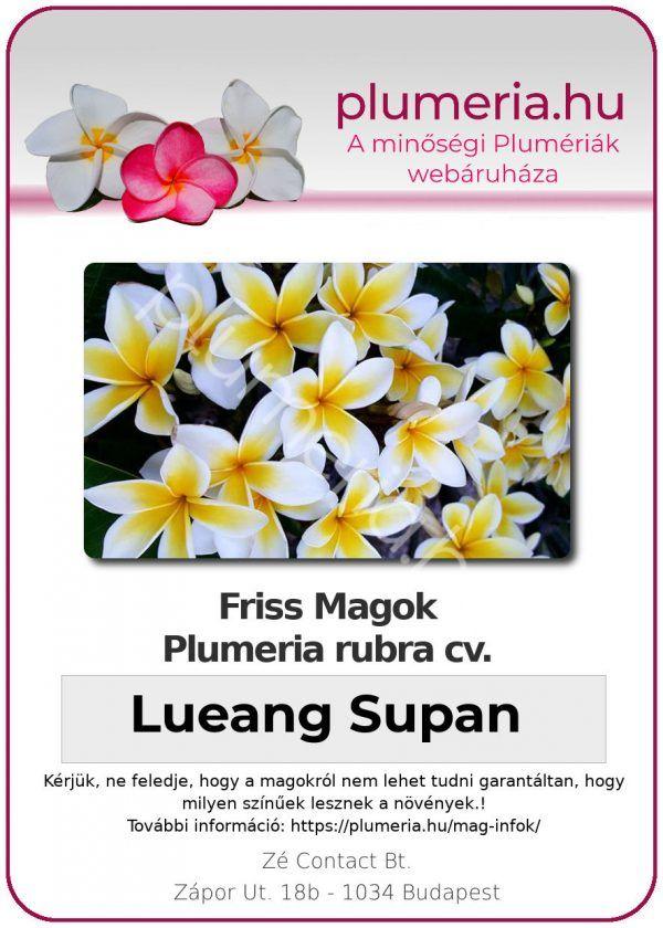 "Plumeria rubra ""Lueang Supan"""