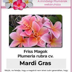 """Plumeria rubra """"Mardi Gras"""""""