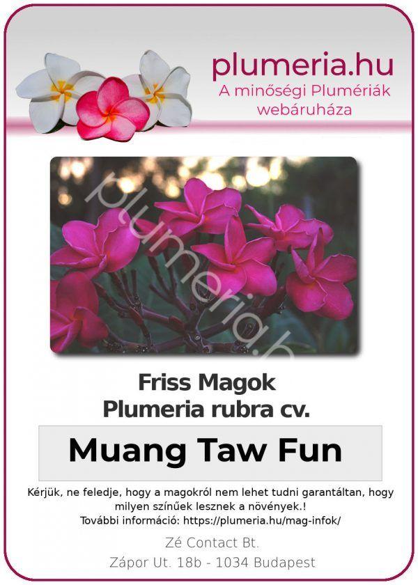"Plumeria rubra ""Muang Taw Fun"""