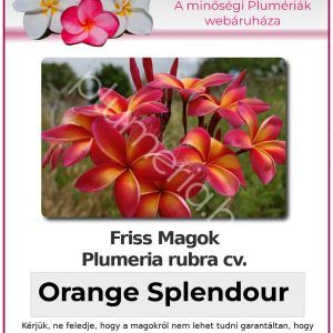 "Plumeria rubra ""Orange Splendour"""
