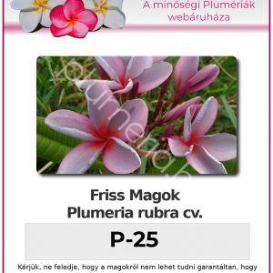 """Plumeria rubra """"P-25"""""""