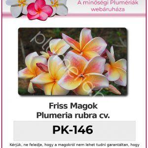 "Plumeria rubra ""PK-146"""
