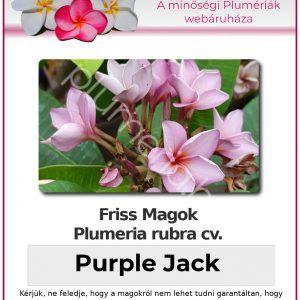 """Plumeria rubra """"Purple Jack"""""""