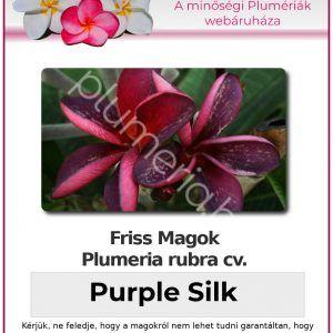 "Plumeria rubra ""Purple Silk"""