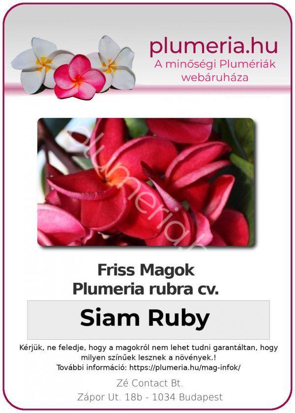 """Plumeria rubra """"Siam Ruby"""""""