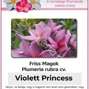 "Plumeria rubra ""Violett Princess"""