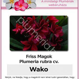 """Plumeria rubra """"Wako"""""""