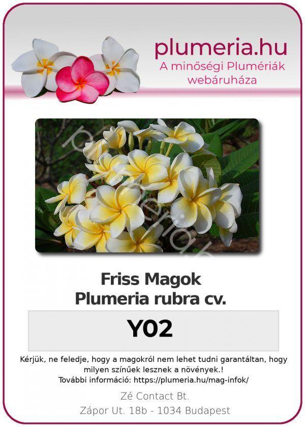 "Plumeria rubra ""Y02"""