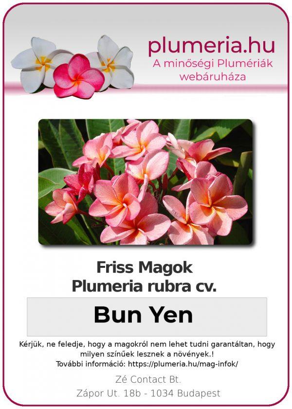 """Plumeria rubra """"Bun Yen"""""""
