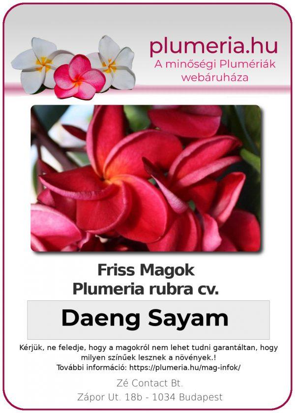 """Plumeria rubra """"Daeng Sayam"""""""