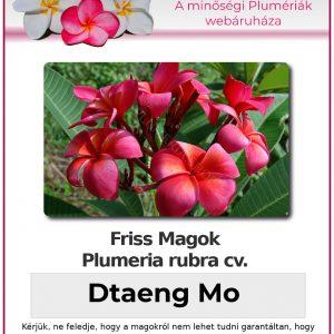 "Plumeria rubra ""Dtaeng Mo"""