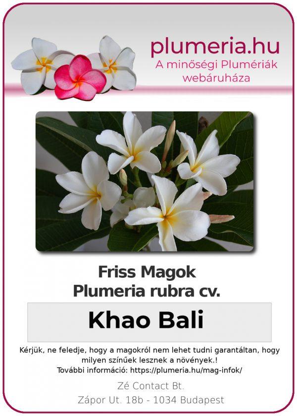 "Plumeria rubra ""Khao Bali"""