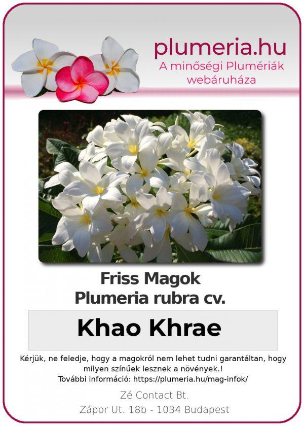"Plumeria rubra ""Khao Khrae"""