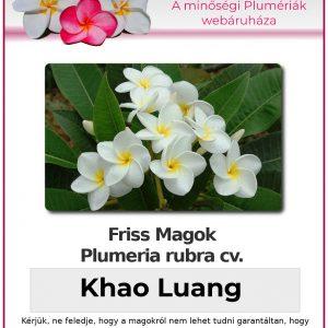 "Plumeria rubra ""Khao Luang"""