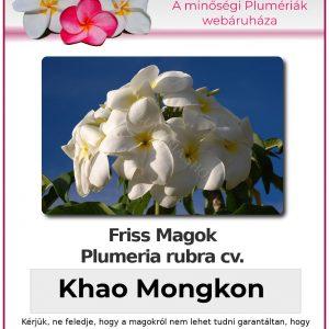 """Plumeria rubra """"Khao Mongkon"""""""