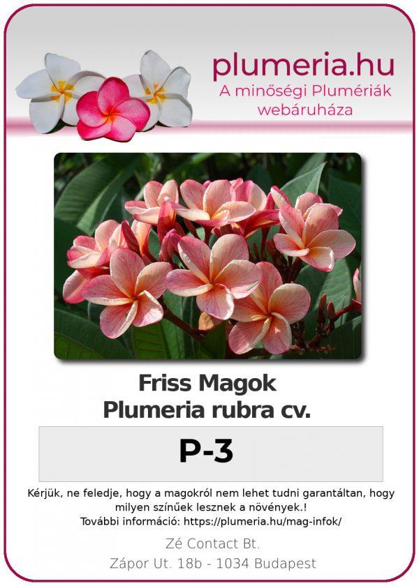 """Plumeria rubra """"P-3"""""""