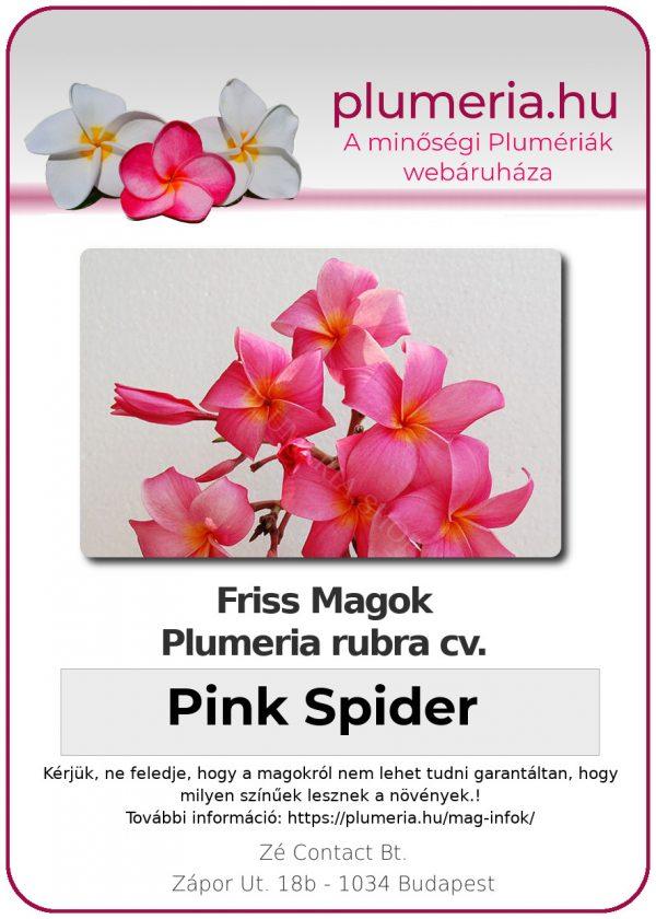 """Plumeria rubra """"Pink Spider"""""""