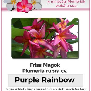 "Plumeria rubra ""Purple Rainbow"""