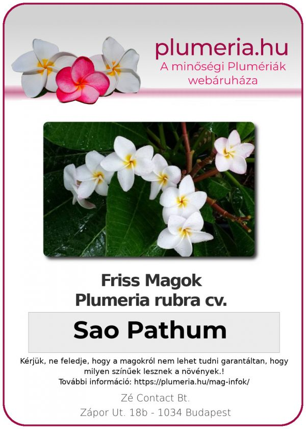"Plumeria rubra ""Sao Pathum"""
