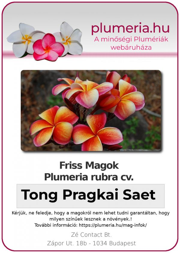 """Plumeria rubra """"Tong Pragkai Saet"""""""