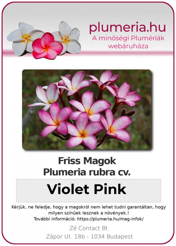 "Plumeria rubra ""Violet Pink"""
