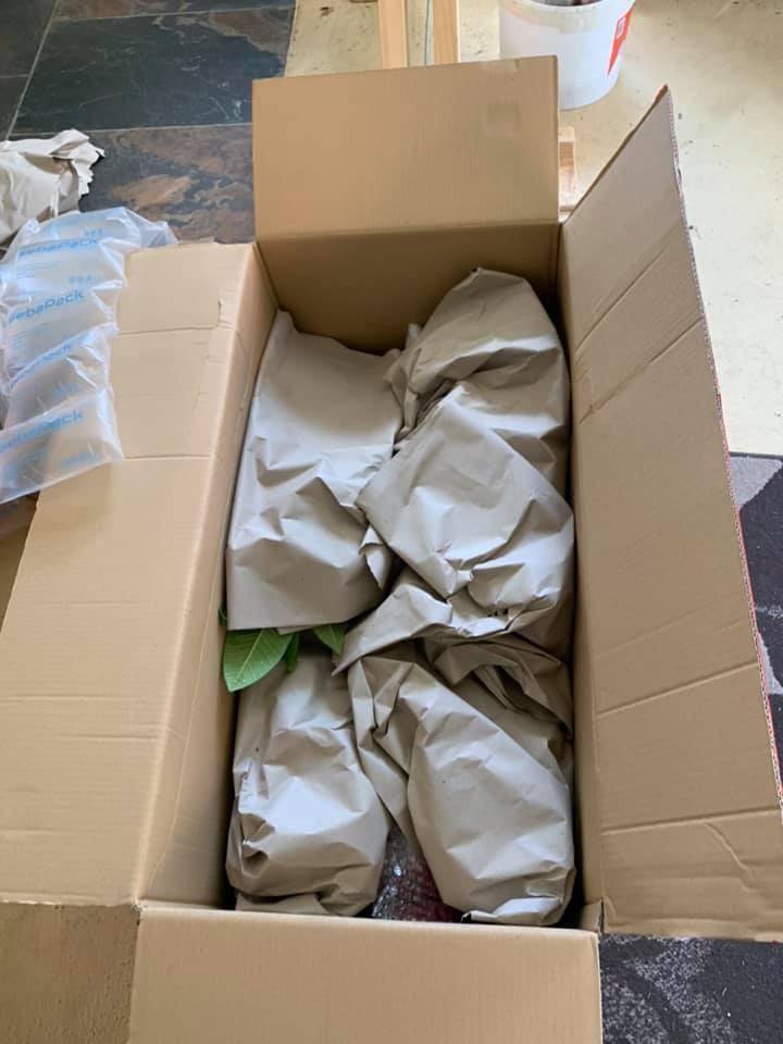 Plumeria / Frangipani Csomagolás