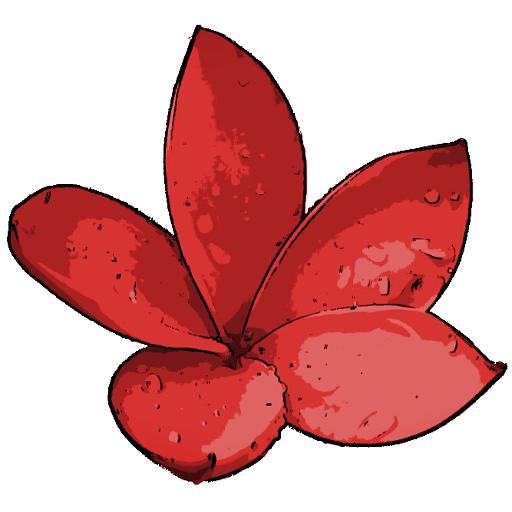 Piros Plumeria