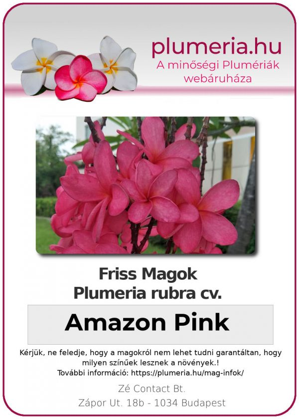 "Plumeria rubra ""Amazon Pink"""