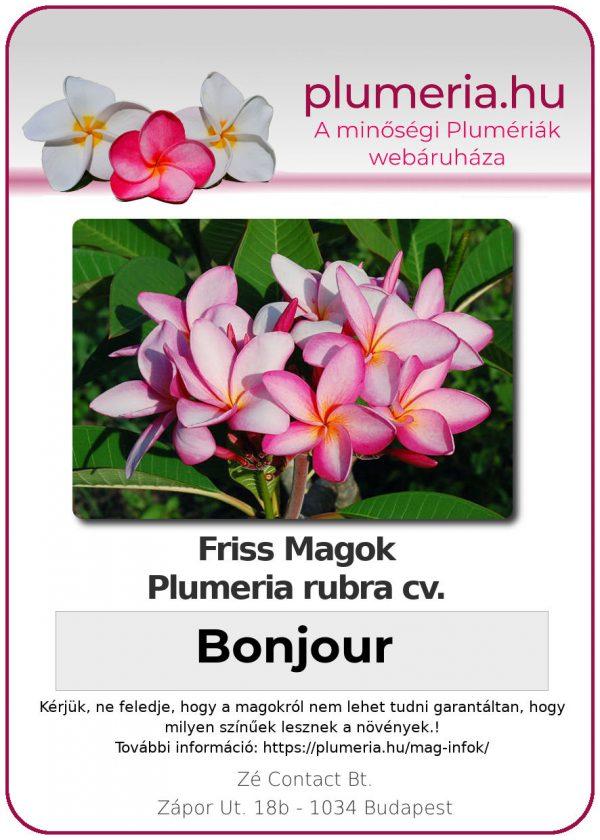 "Plumeria rubra ""Bonjour"""