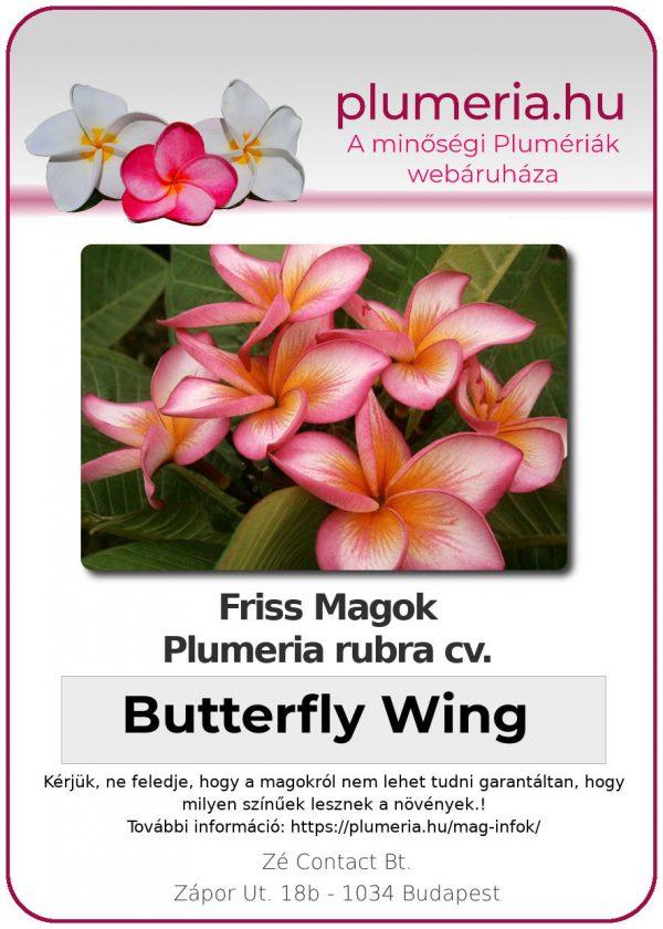 """Plumeria rubra """"Butterfly Wing"""""""