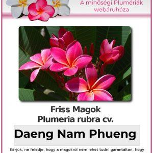 "Plumeria rubra ""Daeng Nam Phueng"""