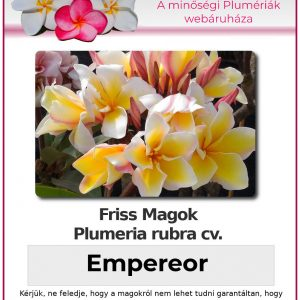 "Plumeria rubra ""Empereor"""