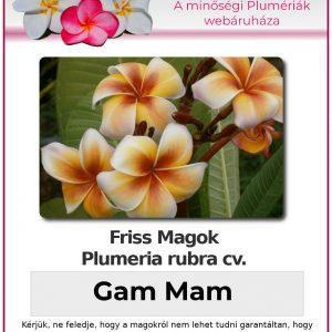 """Plumeria rubra """"Gam Mam"""""""