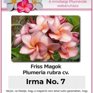 "Plumeria rubra ""Irma No. 7"""