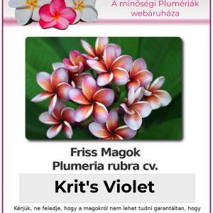 "Plumeria rubra ""Krit's Violet"""