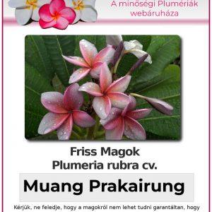 """Plumeria rubra """"Muang Prakairung"""""""
