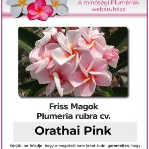 "Plumeria rubra ""Orathai Pink"""